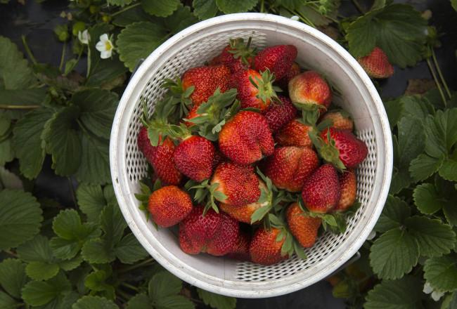 Strawberriesforstory_1920